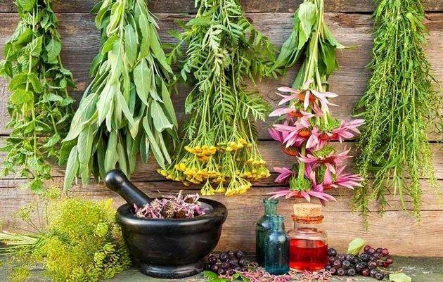 تجارت گیاهان دارویی در سال 2050 به 500 بیلیون دلار می رسد